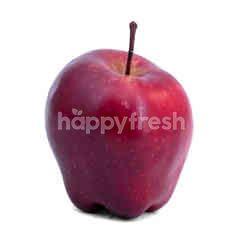 Apel USA Kecil
