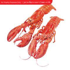 Home Fresh Mart USA Main Lobster