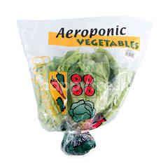 Amazing Farm Aeroponic Butterhead Lettuce