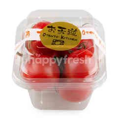 Otento Japanese Tomato