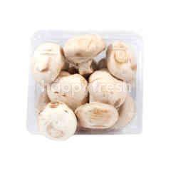 Adib Champignon Mushrooms