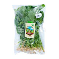 Living Organic Bayam Hijau Organik