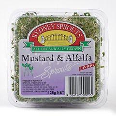 SYDNEY Sprouts Mustard & Alfalfa