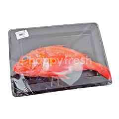 The Dock Fresh Seafood Kinki Fresh Fish
