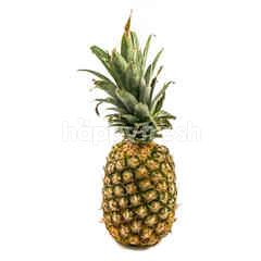 Sunpride Golden Honi Pineapple