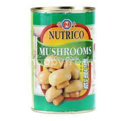 NUTRICO Mushrooms Choice Whole