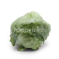 GENTING GARDEN Iceberg Lettuce Italian Rocket Salad