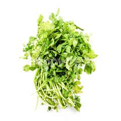 EAT FRESH Watercress (Selada Air)