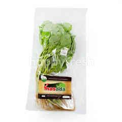 Organic Green Spinach