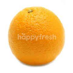 Sunkist Navel Orange