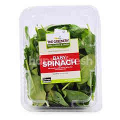 THE GREENERY Spinach Leaves