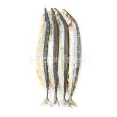 Pasific Saury Fish