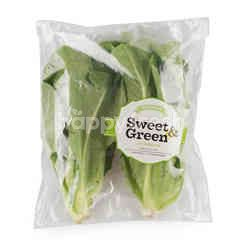 Sweet & Green Green Cos Lettuce