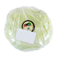 Masada Organic White Cabbage