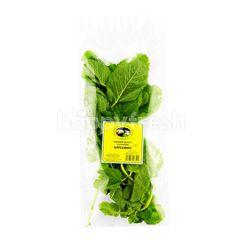 Applemint Herbs