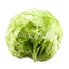Beijing Cabbage