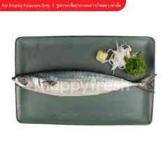 Big C Saba Fish