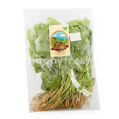 Organic Green Baby Spinach