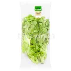 Tesco Eat Fresh Green Oakleaf