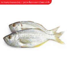 Sirikhun Grey Trevally Fish