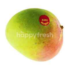 Australian R2E2 Mango