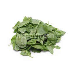 GENTING GARDEN Baby Spinach