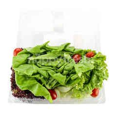 CRUNCHY FRESH Mixed Salad Lettuce