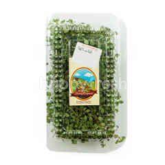 Living Organic Thyme Leaves