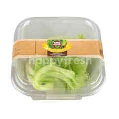 King Organic Lettuce