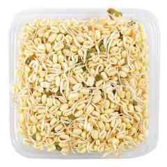 Bimandiri Short Sprout Beans
