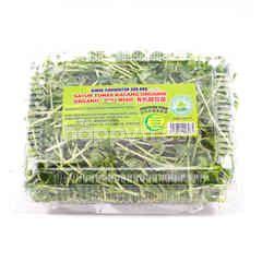 BINDU FLORIKULTUR Organic Pea Sprouts (Dou Miao)