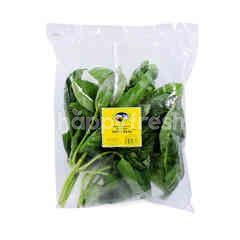 GENTING GARDEN Premium Quality Fresh Herbs Sweet Basil