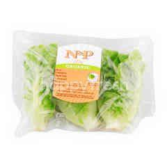Natural & Premium Food Organic Green Cos Salad