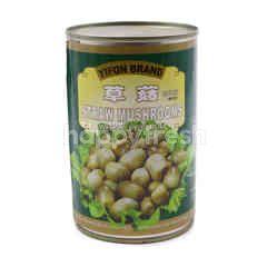 Yifon Brand Straw Mushroom In Canned