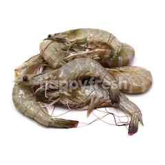 Fresh Prawn XL