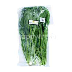 Cambo Green Organic Horenso
