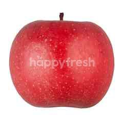Aomori Apple (FuJi) Sunfuji