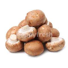 Swiss Brown Mushroom