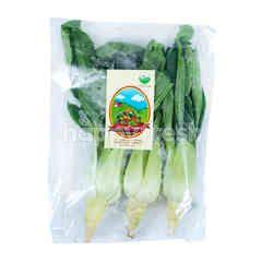 Living Organic Organic Pakchoy