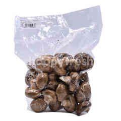 Shitakae Mushroom