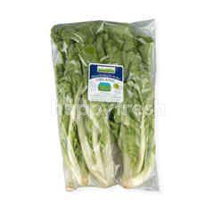 Natural & Premium Food Organic Chinese Cabbage