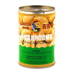 Mamata Brand Jamur Kancing