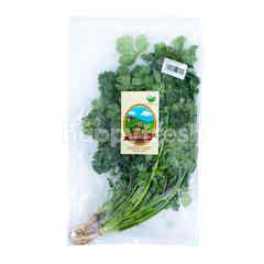 Living Organic Wansui Organik