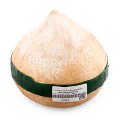 Tesco Perfume Coconut