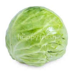 Imported Baby Cabbage