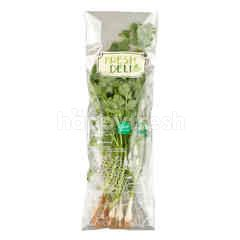 เฟรช เดลี่ ชุดต้นหอมผักชี