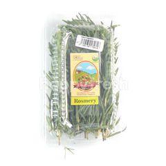 Living Organic Rosemary