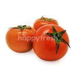 Zenxin Tomato