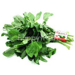 Spinach Round