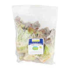 Natural & Premium Food Organic Red Oak Lettuce